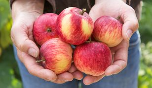 """Sfrustrowani sadownicy wyrzucają jabłka na śmieci. """"Ceny są rażąco niskie - to musi być jakaś zmowa"""""""