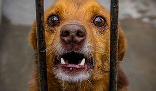 Właścicielka zleciła zabicie dwóch swoich psów. Teraz trafi do więzienia