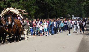 Konie w Zakopanem –  czy ich dramat kiedyś się skończy?
