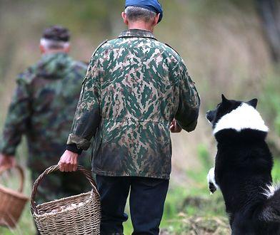 Grupy rumuńskich grzybiarzy widziano już w 10 leśnictwach. Ruszyły patrole Straży Leśnej.