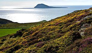 Bardsey Island - wyspa 20 tys. świętych