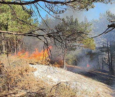 Zagrożenie pożarowe w lasach. Wystarczy iskra, by doszło do tragedii