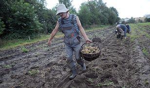 Przeciwnicy Andrzeja Dudy chcą bojkotować plony rolników z Podkarpacia