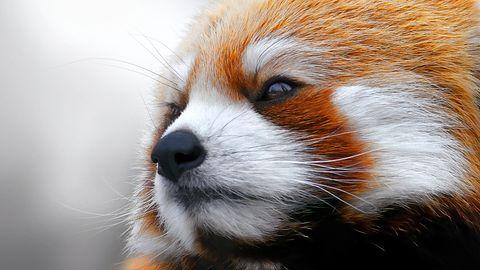 Firefox 33 to znacznie większa responsywność i szybszy JavaScript