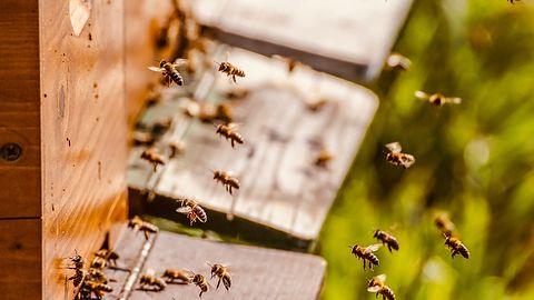 Aplikacja dla pszczelarzy. Tworzą ją uczniowie z Podkarpacia