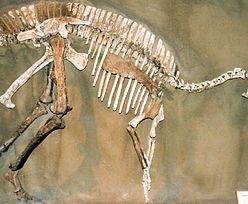 Niesamowite odkrycie. Odnaleziono DNA dinozaura, ma 70 mln lat