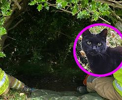 Kobieta wpadła do wąwozu. Uratował ją czarny kot