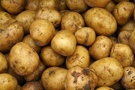 Zielone ziemniaki są toksyczne. Nie jedz ich