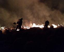 Pożar w Biebrzańskim Parku Narodowym. Spłonęło ponad tysiąc hektarów