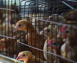 Chiny. Rzadki szczep ptasiej grypy u człowieka