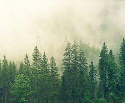 Leśnicy znaleźli roślinę. Problem w tym, że nie powinno jej być w lesie