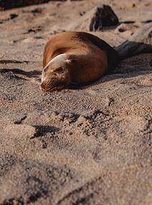 Smutek nad Bałtykiem. Morze wyrzuciło na plażę 57 martwych zwierząt 😭