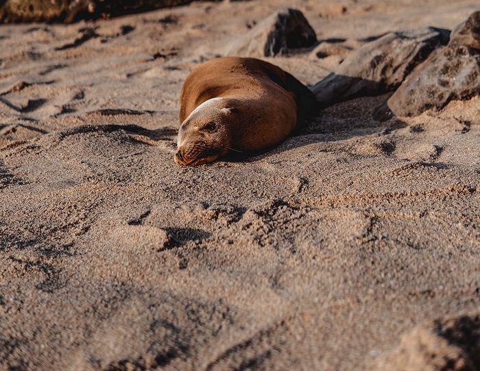 Martwe foki nad Bałtykiem