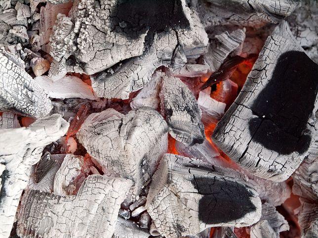 Jak wykorzystać popiół drzewny z kominka lub ogniska? Nie wyrzucaj go, bo jest cenny