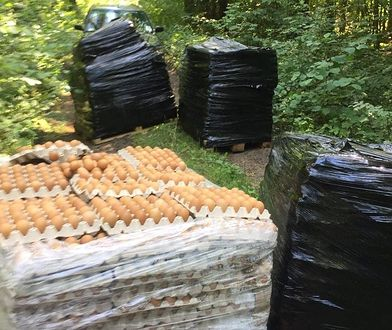 Olsztyn. Leśnicy znaleźli 4 palety jajek w lesie