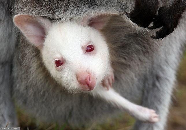 Niektóre zwierzęta mogą wstrzymać ciążę. Rodzą potomstwo w dogodnym dla siebie czasie