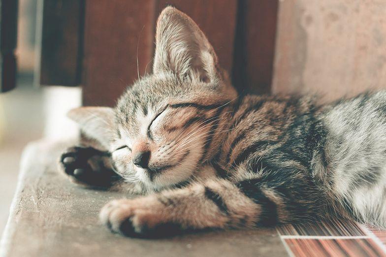 Żwirek dla kota - czy na pewno wiesz, jak wybrać właściwie?