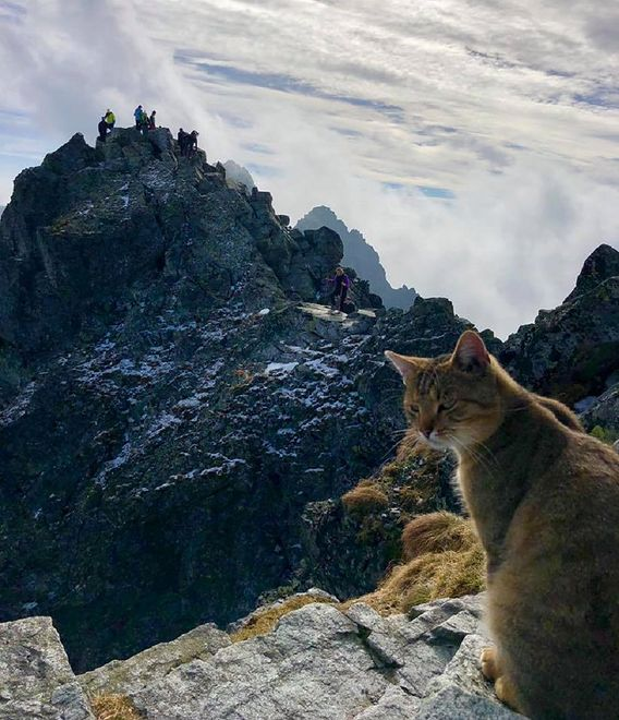 Kot prawdopodobnie doszedł na szczyt podążając za ludźmi.