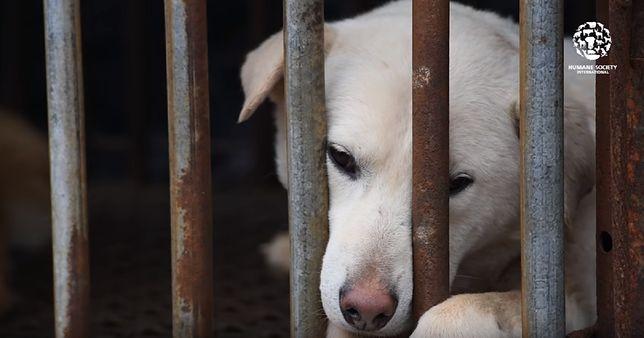 Rozbiórka największej ubojni psów w Korei Płd. Będzie park miejski