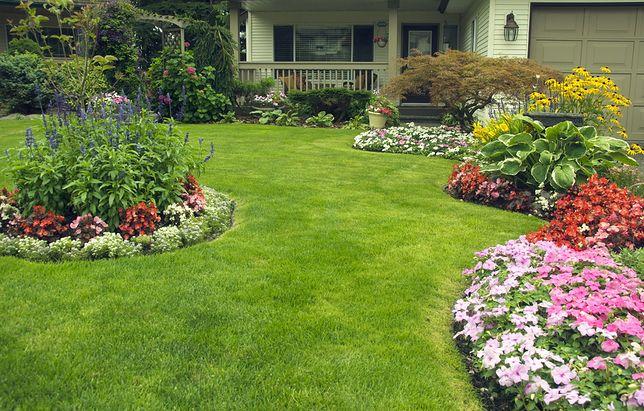 Idealny trawnik to nie problem. Wystarczy właściwie go zasiać i pielęgnować