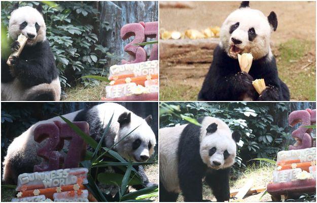 W Hongkongu uśpiono najstarszą pandę żyjącą w niewoli