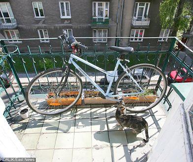 Koty przeszkadzają sąsiadom