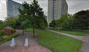 Drzewa przeszkadzały parafianom w Poznaniu. Po sprzeciwie nie zostaną wycięte
