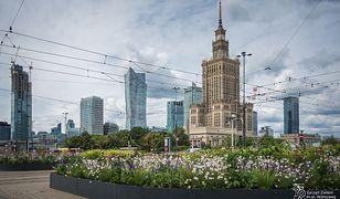 Warszawa ogranicza koszenie trawników