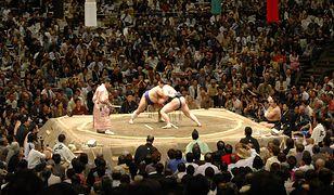 W Warszawie odbędą się Mistrzostwa Europy w sumo!