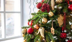 Choinka: kiedy ubierać i jak przechowywać choinkę, żeby przez Święta Bożego Narodzenia cieszyła nas jak najdłużej?