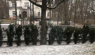 Warszawa. Spadł pierwszy śnieg! IMGW alarmuje