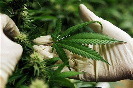 Marihuaną leczą raka i chorobę Parkinsona