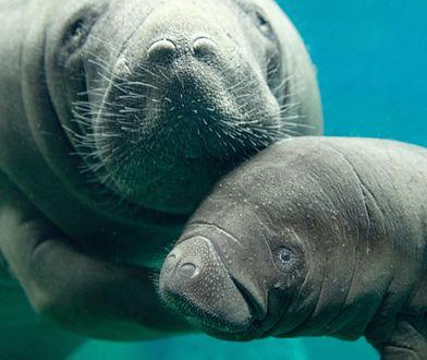 Zoo we Wrocławiu. Na świat przyszedł przedstawiciel zagrożonego gatunku