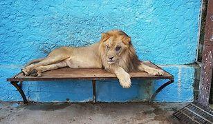 Zoo z piekła rodem. Przerażające warunki w Safari Park w Albanii