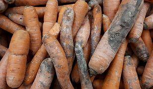 Nadgniłe marchewki na sprzedaż w supermarkecie