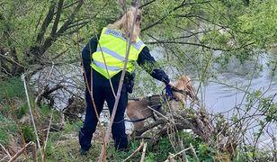 Poszukiwania Kacpra z Nowogrodźca. Najprawdopodobniej znaleziono ciało 3,5-latka