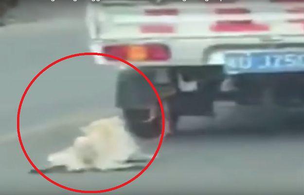 Pies był przywiązany do samochodu i ciągnięty po drodze. Uwaga: drastyczne zdjęcia