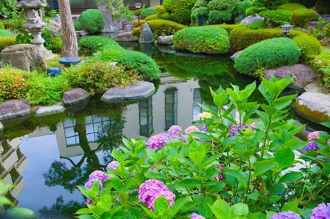 Orient w ogrodzie