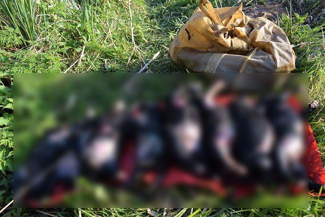 Mężczyzna utopił w bagnie 8 szczeniaków