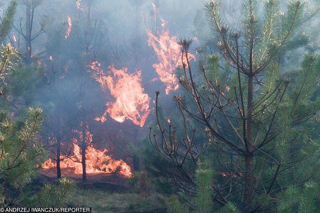 Od początku roku straż pożarna wyjeżdżała do gaszenia lasów ponad 2,8 tys. razy, z czego aż 2,2 razy w kwietniu