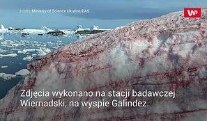 Arbuzowy śnieg. Niesamowite zjawisko na Antarktydzie