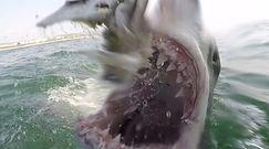 Atakujący żarłacz biały. Przerażające nagranie fotografa