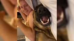 Pies w łóżku. Ten owczarek niemiecki nie chce z niego wyjść. Zabawne nagranie właścicieli
