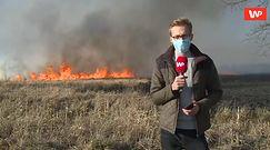 """Biebrzański Park Narodowy w płomieniach. Reporter WP: """"Wiatr nie ułatwia sprawy"""""""