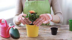 Zasady przesadzania roślin doniczkowych
