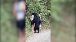 ''Przyjacielski'' niedźwiedź. Chciał zapoznać się z turystką
