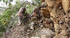 Po 53 dniach rehabilitacji wypuścili pumę na wolność