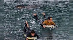 Atak rekina. Świadek wszystko nagrał