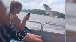 """""""Latająca"""" ryba i niespodziewany atak. Wszystko nagrali telefonem"""