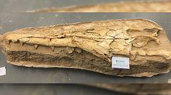 Niezwykłe odkrycie w kopalni fosforanów